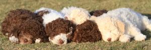 I cuccioli di Olympia (Foto di Mary).