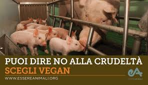 You can say no to cruelty: Choose Vegan